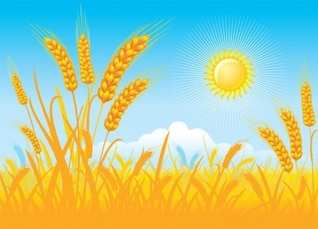 Campo de trigo dia ensolarado vector