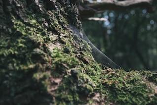Teia de aranha sobre a rocha