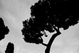 Silhueta de uma árvore alta definição