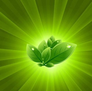 folhas com verde explosão fundo do vetor luz abstrata