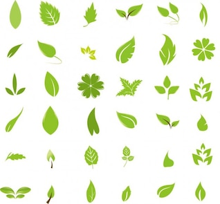 elementos de design verde folha