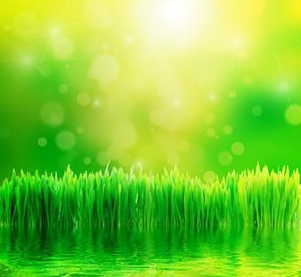 A grama fresca com efeito bokeh