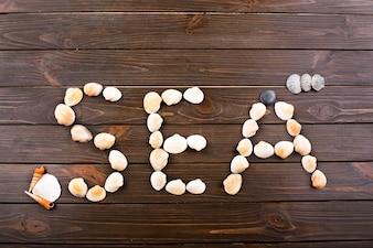 A palavra com seashells