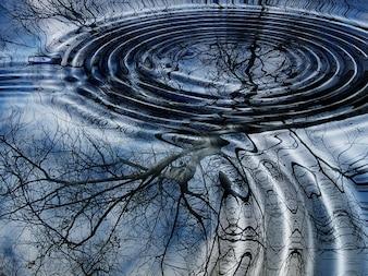 água anéis de árvore ver inverno onda de bétula espelhamento