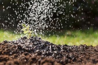 Água que cai em uma planta