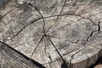 Anéis de madeira