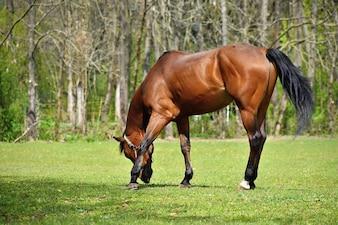 Animal na grama. Cavalos bonitos que pastam livremente na natureza.