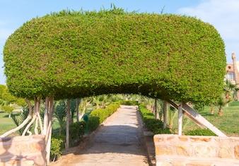 Arco feito de arbustos