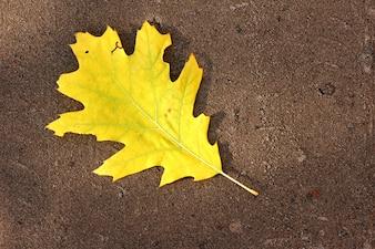 árvore de folha amarela