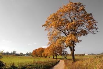 Árvore em uma estrada de terra