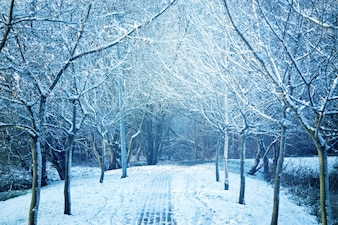 árvores cobertas de neve