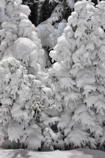 árvores na paisagem de neve