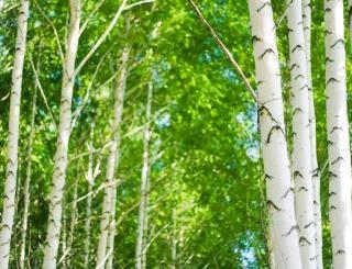 árvores, paisagem
