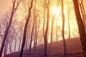 Árvores secas no por do sol