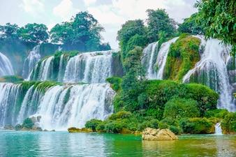 Árvores selvagens cai saigão asiático famoso