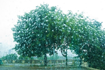 Árvores verdes em um prado
