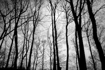 As árvores sem folhas