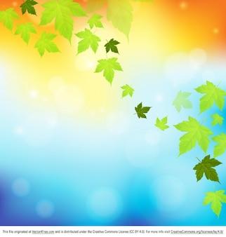 Folhas de outono de fundo a natureza