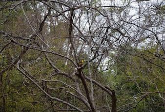 aves coloridas em uma árvore