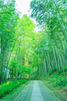 Bambu tranquilo China Forest japão
