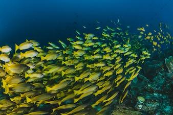 Banco de areia de peixes tropicais no oceano