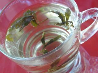 Beber chá verde