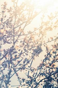 Bela borrão de fundo florístico colorido. Horizontal. Conceito da Primavera. Toning. Foco seletivo.