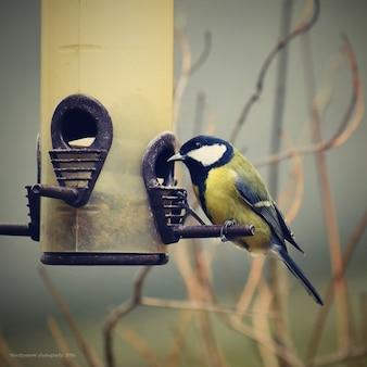 Bela foto de um pássaro. Ótimo Tit (Parus major) e fundo colorido.