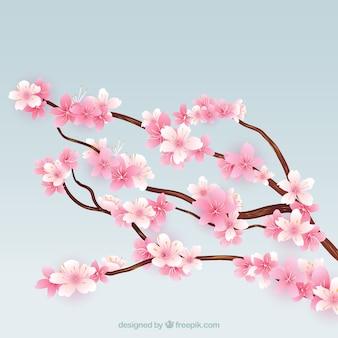 Blooming galhos de árvore de cerejeira