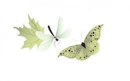 Borboleta libélula delicada vector suave