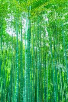 Bosque bonito vara alto tranquilo