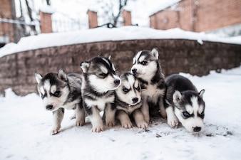 Cães do bebê