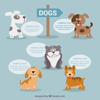 Cães infográfico