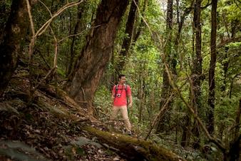 Caminhante, ficar, logo, enorme, árvore