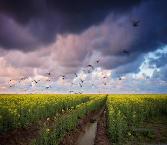 Caminho de terra com nuvens escuras