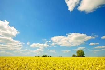 Campo amarelo com nuvens