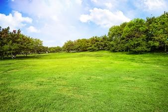 Campo com grama e nuvens