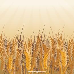 Campo de vetor de trigo