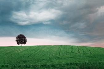 Campo verde com uma árvore
