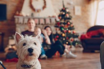 Cão branco com uma família de fundo desfocado