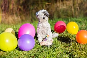 Cão feliz que comemora seu aniversário