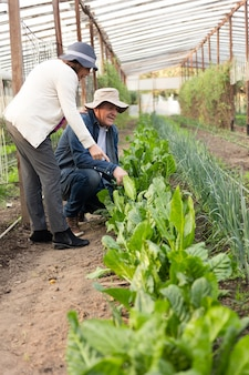 Casal Eco-friendly verificando as plantas verdes