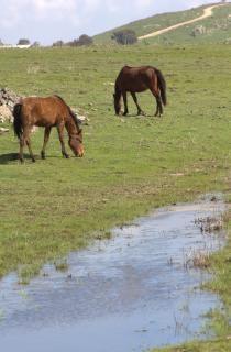 Cavalos na Alta Galiléia