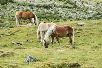 Cavalos selvagens na pastagem