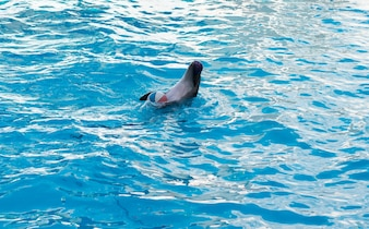 Cena de show de golfinhos