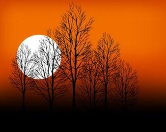 cena do pôr do sol, as árvores secas sobre a terra rachada