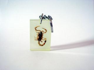 chaveiro escorpião, garras