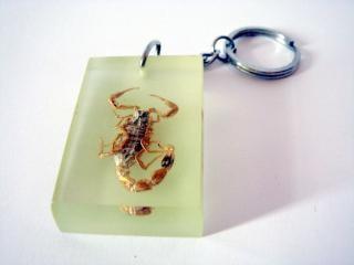 chaveiro escorpião, réptil