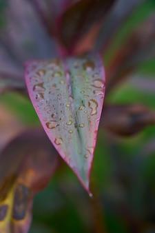 Chuvoso Malásia vermelho folhas molhadas