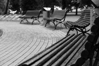 Cinza humor do relaxamento folhas parque